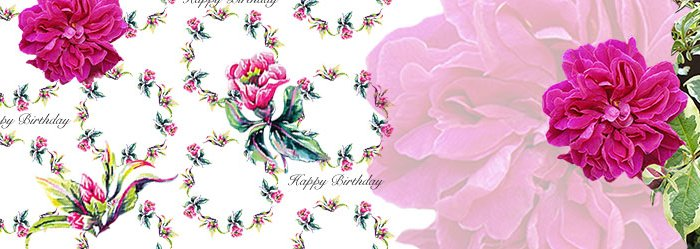 Cerise Rose Birthday Card